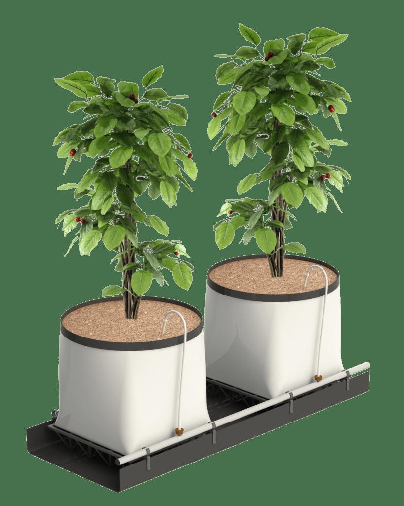 hydroponic arándanos